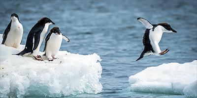 南極昭和基地の大気中の微生物はヒトが持ち込んでいるのか