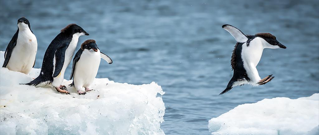 <h1>南極昭和基地の大気中の微生物はヒトが持ち込んでいるのか</h1>