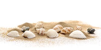 環境の変化する砂浜海岸を理科教材として活用していくための基礎的研究