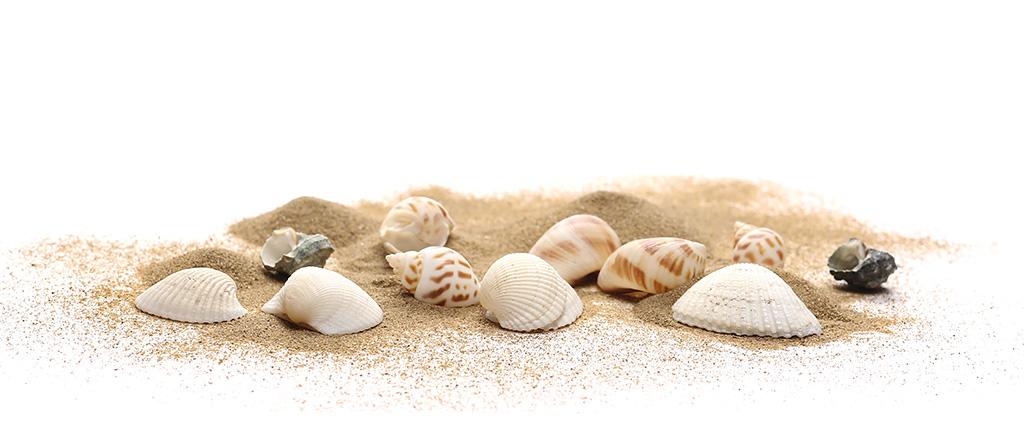 <h1>環境の変化する砂浜海岸を理科教材として活用していくための基礎的研究</h1>