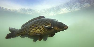 環境DNAを利用した仏生寺川・万尾川水系河川の生物相調査及び生物保全の実践活動