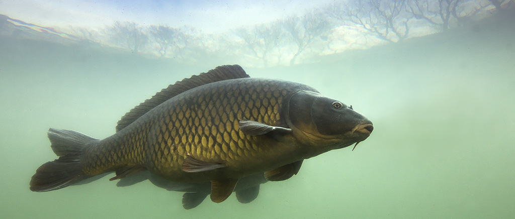 <h1>環境DNAを利用した仏生寺川・万尾川水系河川の生物相調査及び生物保全の実践活動</h1>